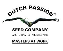 dutch passion 2